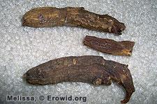 Erowid Ginseng Vault (Panax ginseng : P. schinseng)