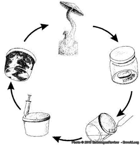 Phd thesis on button mushroom