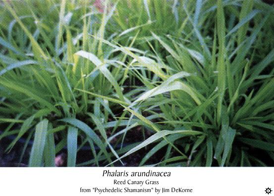 salicin haltige pflanzen